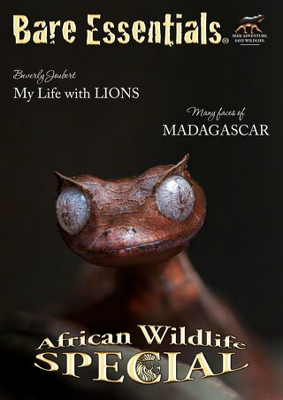 African Wildlife Special